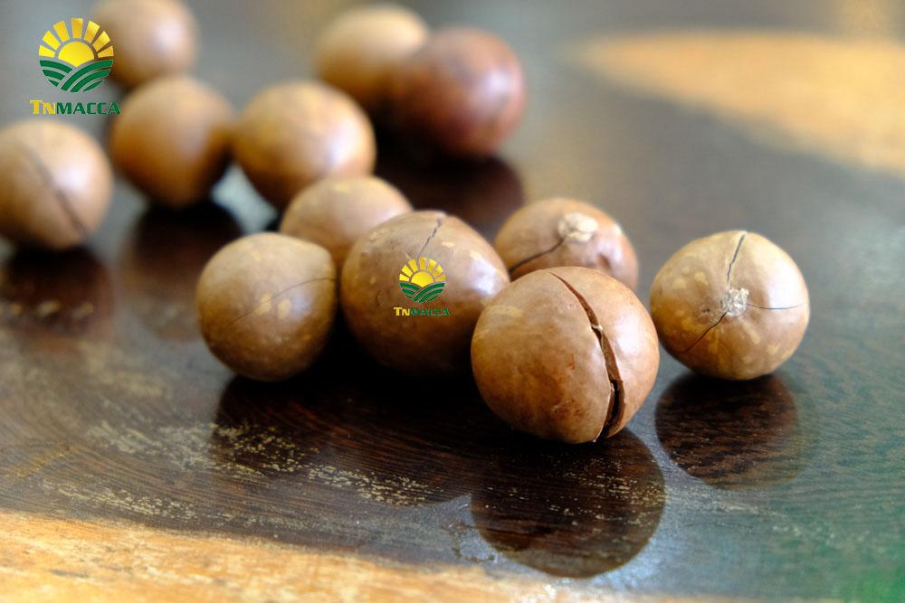 Hạt Macadamia là gì mà nhiều người quan tâm nhiều như thế