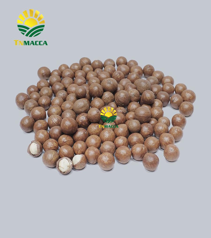 Macca sấy chưa nứt vỏ size 19-21 mm Nguyên Thùng 10 Kg
